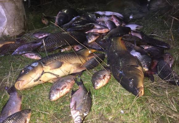 Картинки по запросу риба